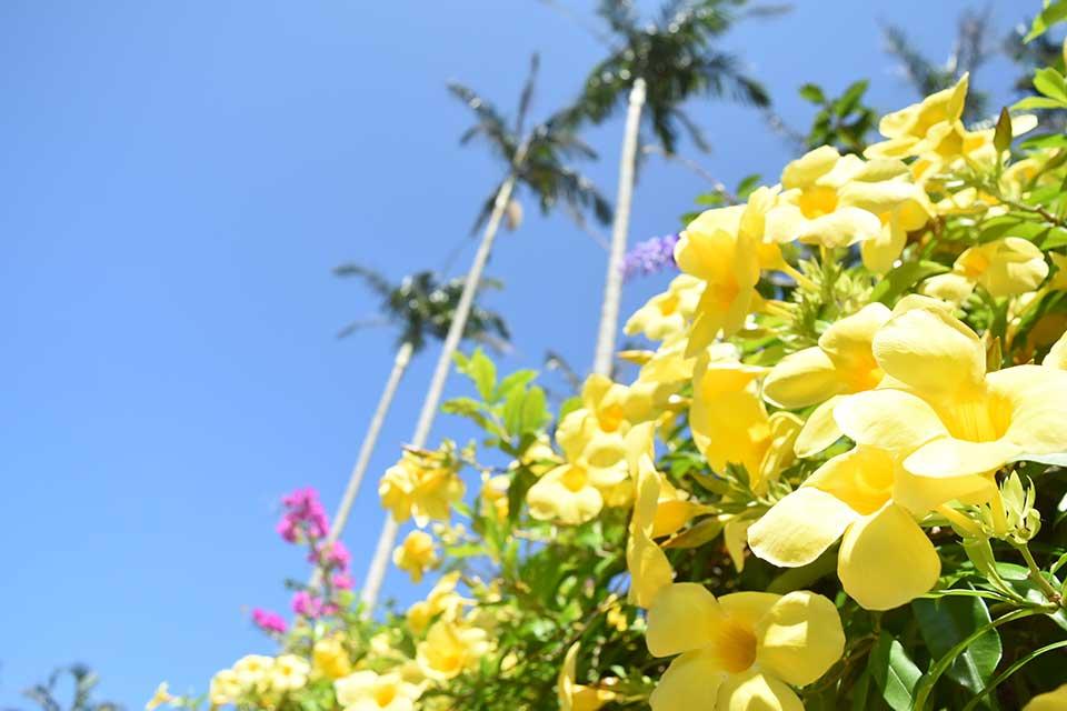 東南植物楽園_1