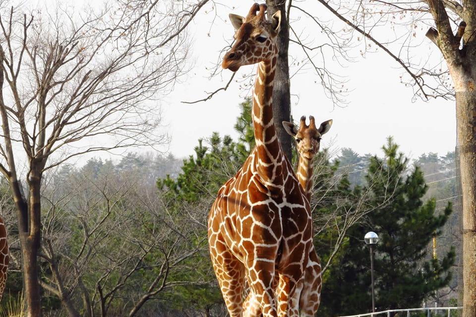 県 公園 埼玉 自然 こども 動物