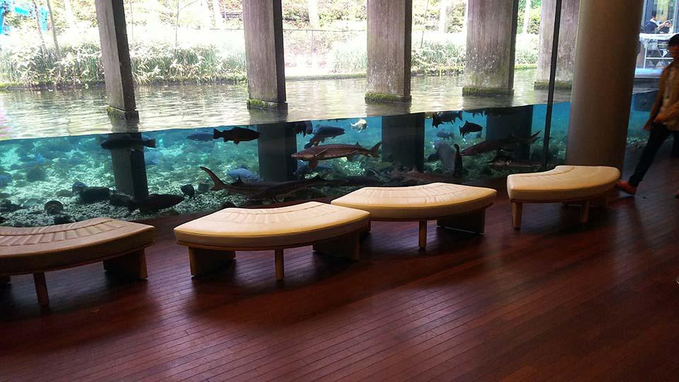 森の中の水族館。 山梨県立富士湧水の里水族館_1