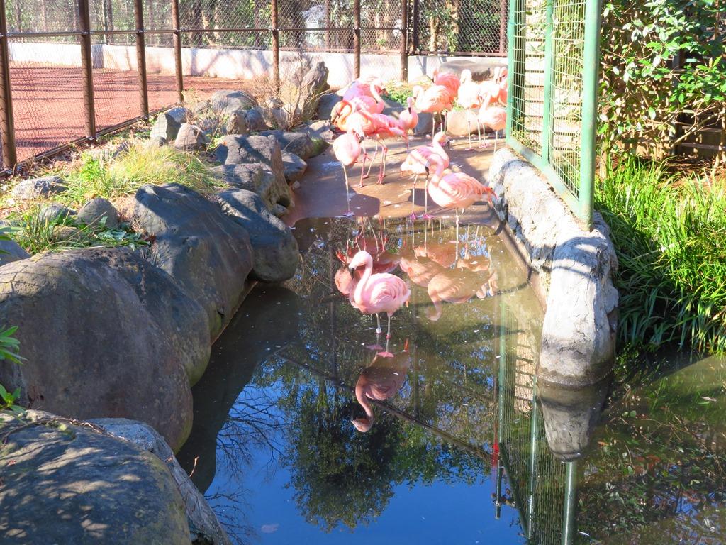 野毛山動物園_31